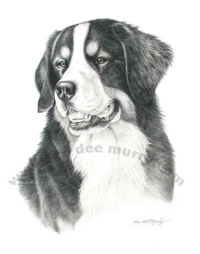 Dee Dee Murry Fine Art - Bernese Mountain Dog