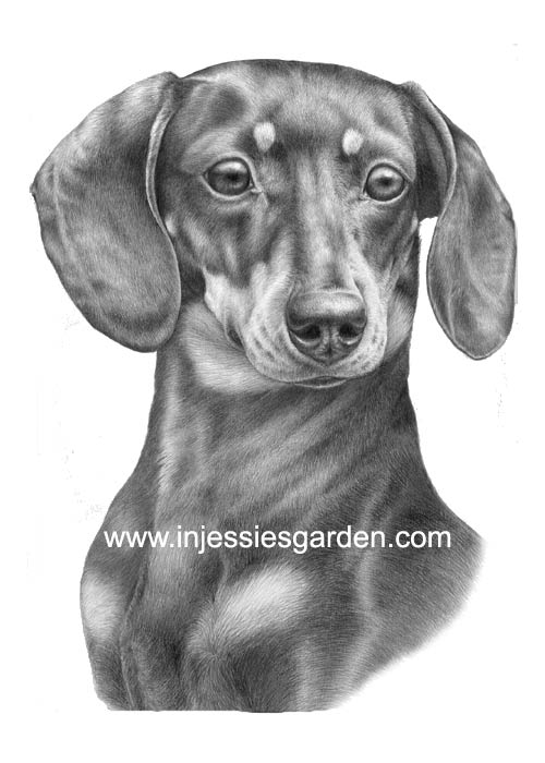 Smooth Dachshund Black and Tan Art